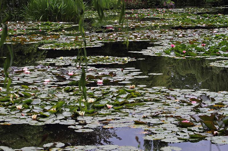 Lilie wodne w Giverny