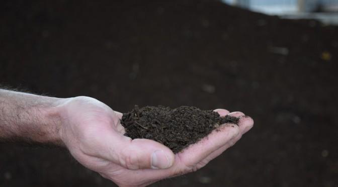 Kompost – złoto ogrodników