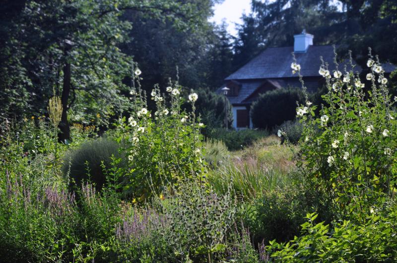 letnia-rabata-kwiatowa