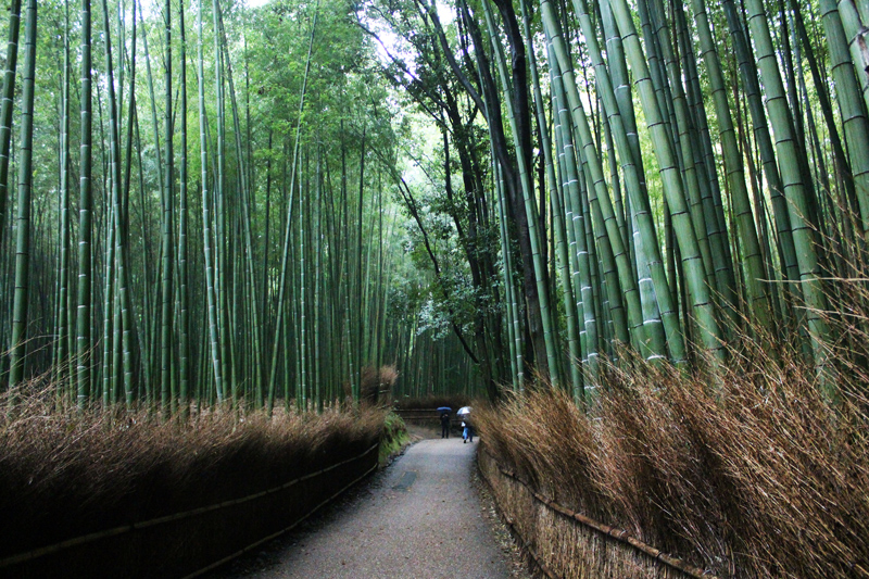 Arashiyama- ścieżka w bambusowym lesie