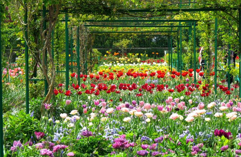 Ogród w Giverny - tulipany
