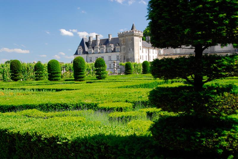 Ogrody Villandry- topiary
