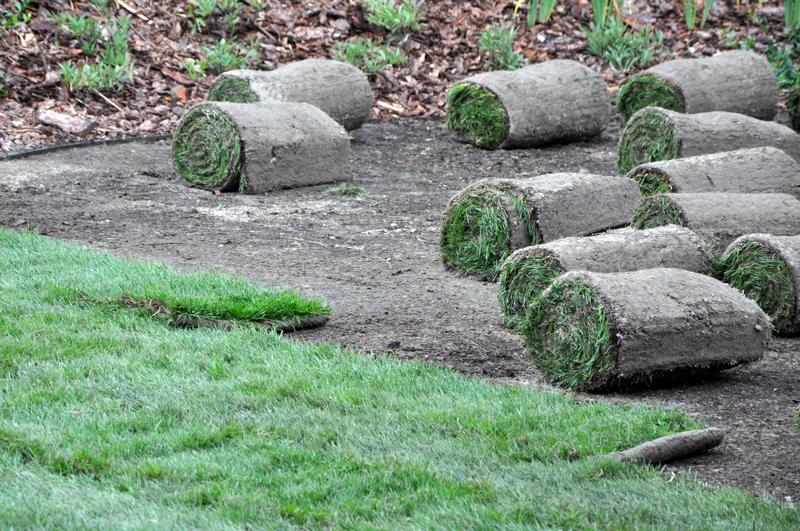 zakladanie-ogrodu-trawnik-z-rolki