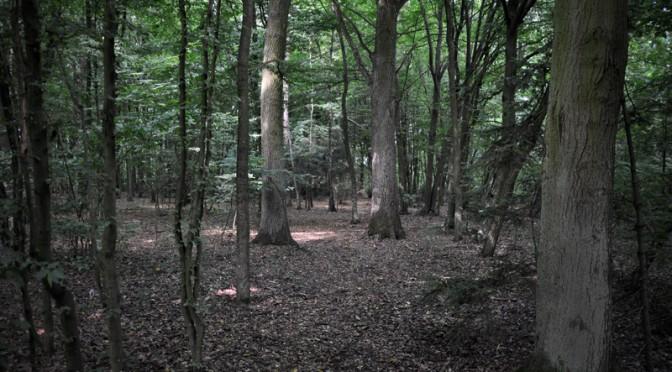 Pozwolenie na wycinkę drzew – zmiany w 2016r.