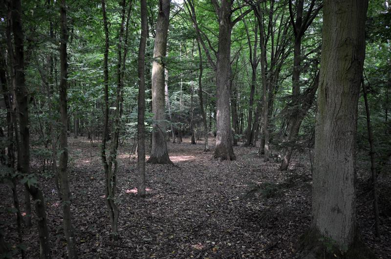 Zezwolenie na wycinkę drzew