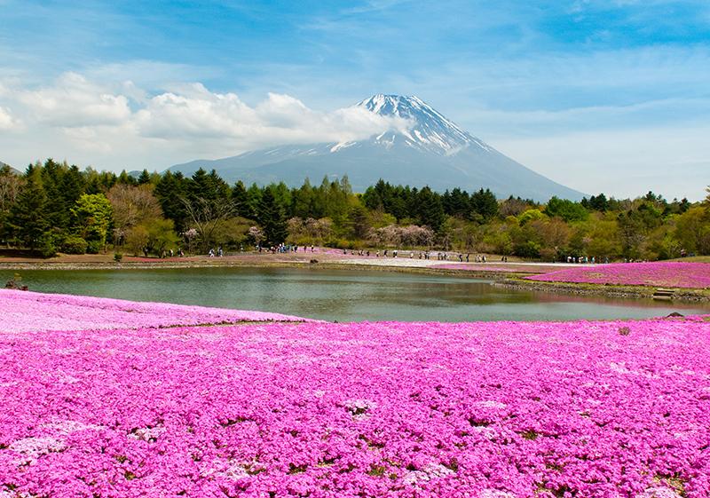 Parki kwiatowe Japonii
