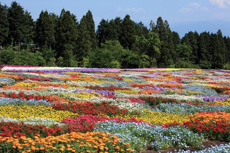 park-kwiatowy-kuju