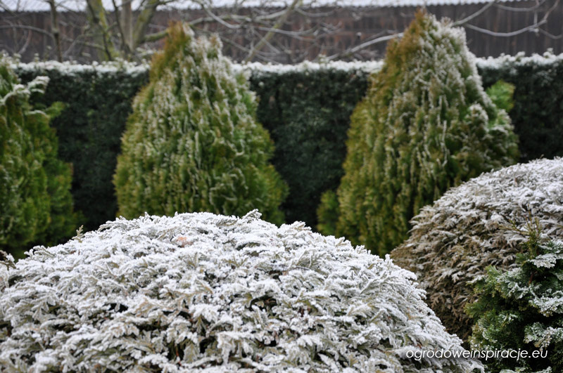 zima-w-ogrodzie