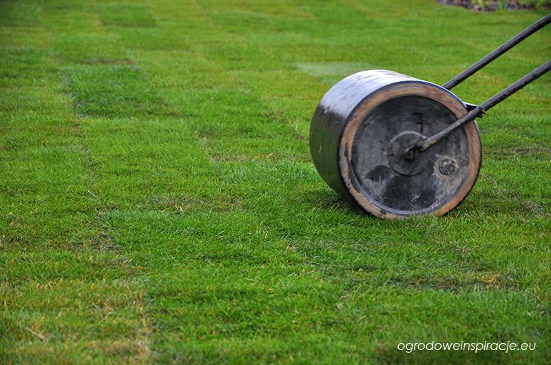 Wałowanie trawnika z rolki