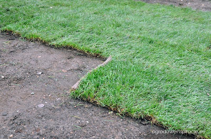 Trawnik z rolki układamy podobnie jak cegły w murze
