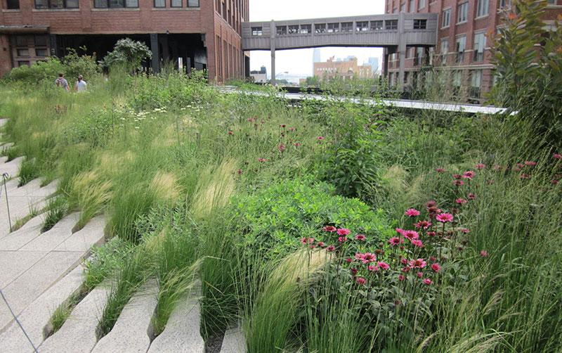 Preriowa kompozycja traw i bylin w Parku High Line