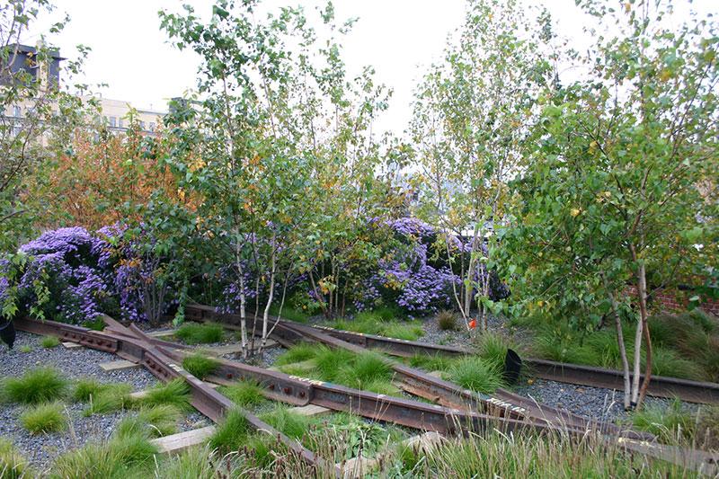 Roślinność na torowisku w parku