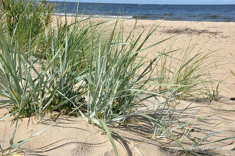 Chłodna rabata na rozgrzanym piasku
