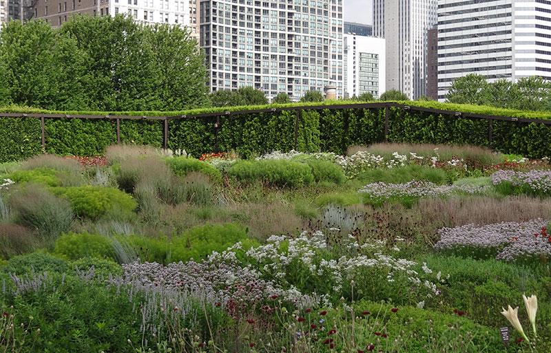 Lurie Garden- ogród w stylu preriowym