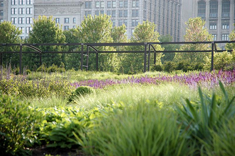 Bylinowa kompozycja w ogrodzie preriowym