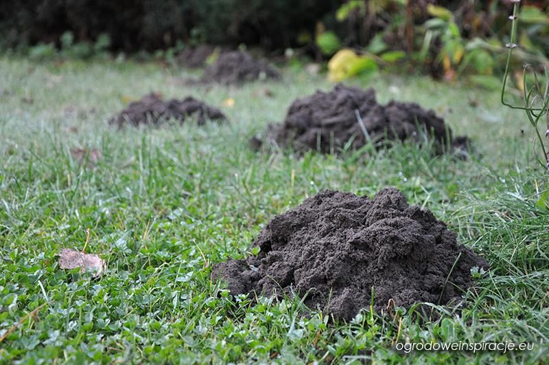 Jak pozbyć się kreta z ogródka ?