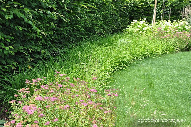 Liliowce jako roślina okrywowa