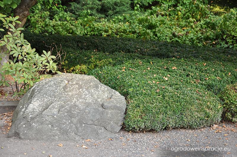 Przystrzyżone rośliny w ogrodzie japońskim