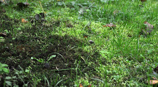 Mech na trawniku – jak się go pozbyć?