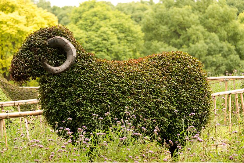 Topiary – sztuka formowania roślin