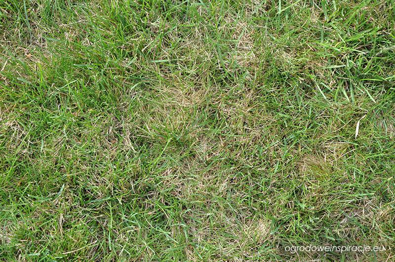 """Filc"" na trawniku"