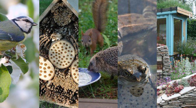 Ogród przyjazny dzikim zwierzętom