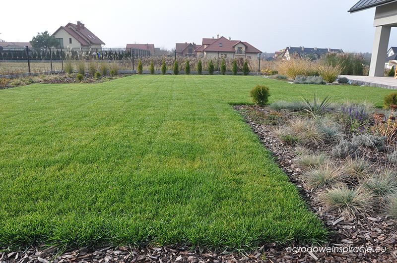 Trawnik z siewu jesienią