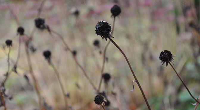 """""""Brązowy to też kolor"""" – o roślinach co pięknie umierają"""