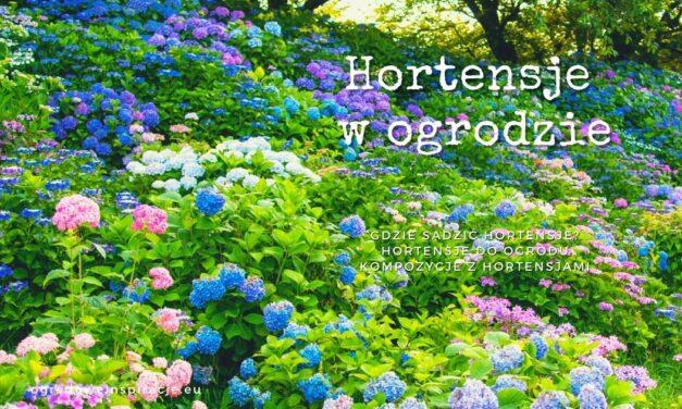 Hortensje w ogrodzie
