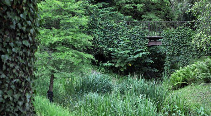 Zielony ogród