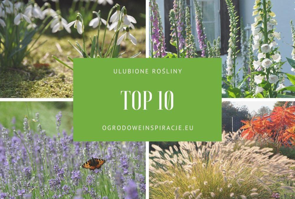 10 ulubionych roślin